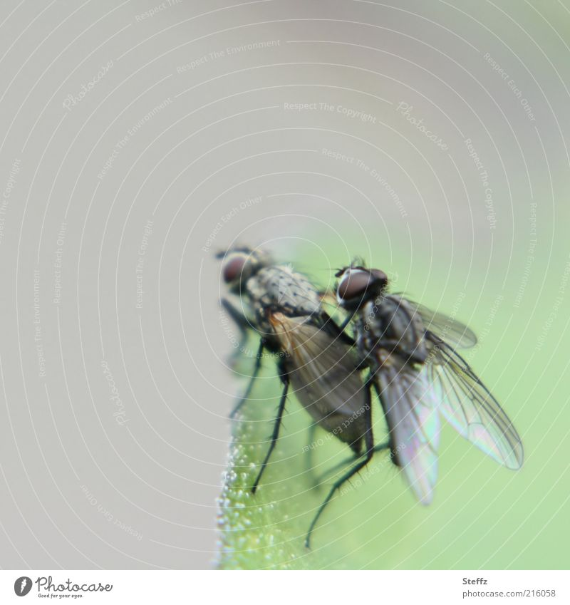 Nature Animal Life Funny Spring Gray Small Natural Legs Fly Pair of animals Wing Joie de vivre (Vitality) Living thing Insect Attachment