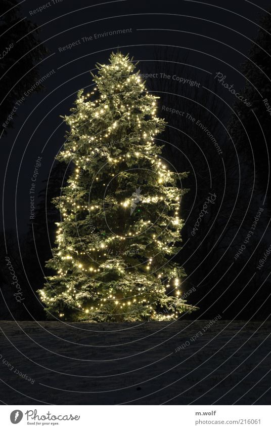 Nature Christmas & Advent White Tree Plant Winter Calm Black Snow Wood Ice Moody Religion and faith Feasts & Celebrations Gold Frost