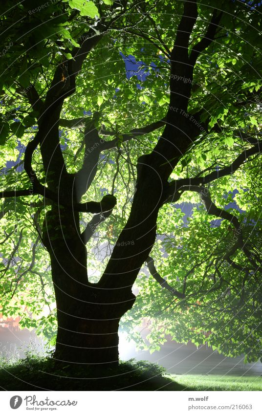 Light and shadow Environment Nature Plant Tree Park Wood Old Exceptional Green Black Moody Bizarre Sustainability Environmental protection Kassel