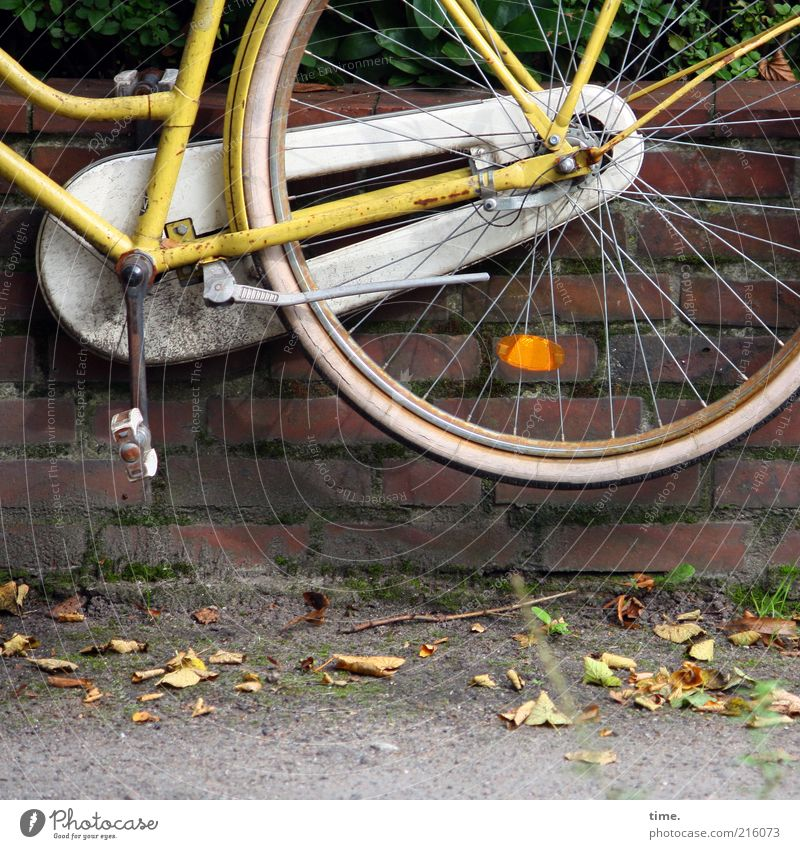 Leaf Yellow Wall (building) Wall (barrier) Bicycle Flying Tall Exceptional Brick Wheel Sidewalk Symbols and metaphors Hang Parking Hover