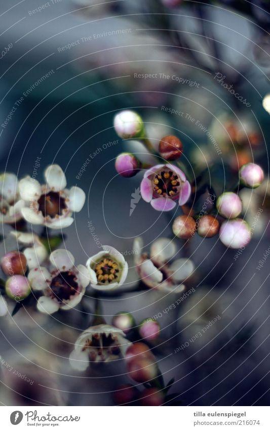 Nature Beautiful White Flower Blue Plant Blossom Environment Esthetic Violet Wild Natural Blossoming Bud Original Blossom leave