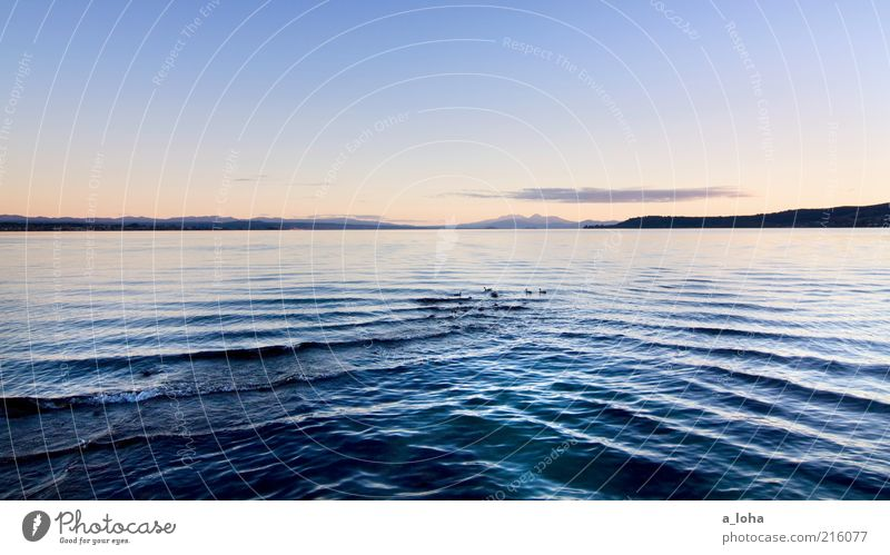 lake taupo Nature Landscape Water Sky Sunrise Sunset Beautiful weather Rock Mountain Coast Lakeside Duck Group of animals Dark Cold Wet Blue Contentment