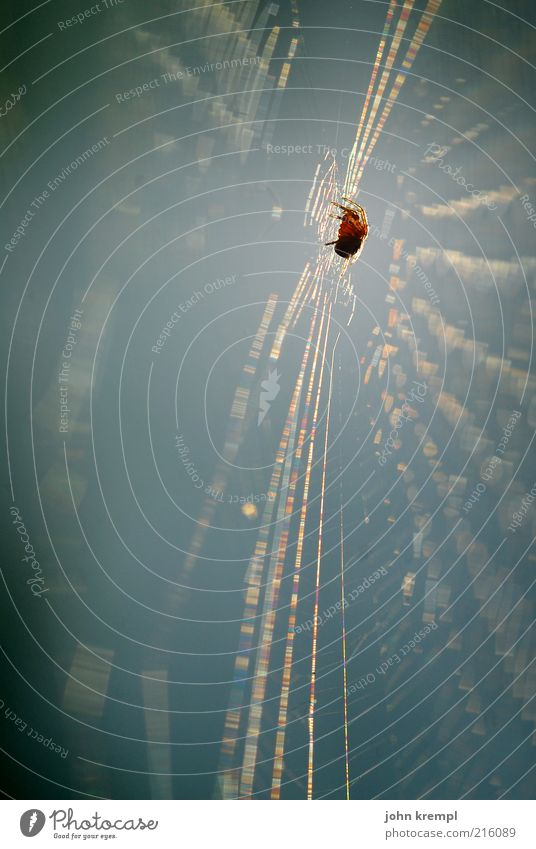Animal Wait Threat Hunting Disgust Build Effort Spider Net Diligent Spider's web