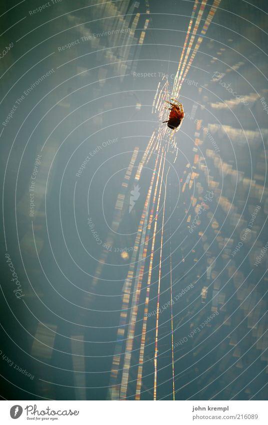 Animal Wait Threat Hunting Disgust Build Effort Spider Net Diligent Spider's web