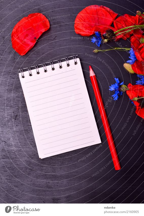 Empty paper notepad Beautiful Summer Nature Plant Flower Leaf Blossom Paper Bouquet Natural Wild Blue Red Black Colour Pencil Poppy Cornflower blooming Bud
