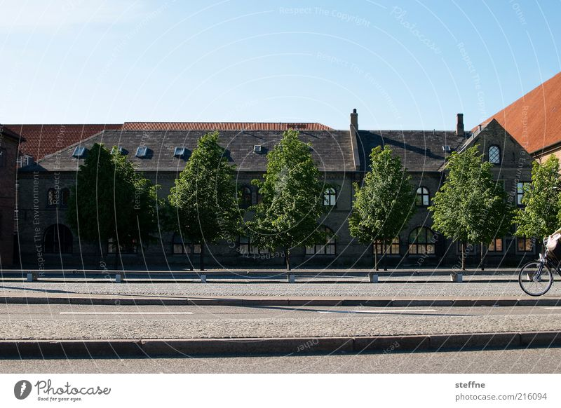 Tree Calm House (Residential Structure) Street Building Facade Transport Idyll Cycling Beautiful weather Roof Old town Scandinavia Blue sky Road traffic Denmark