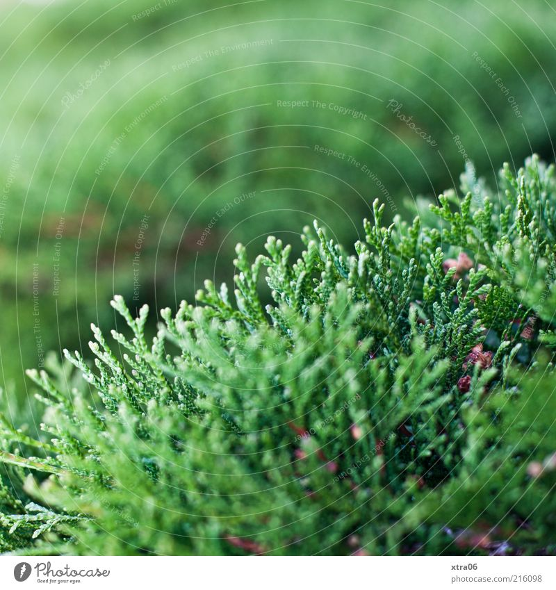 Nature Green Plant Environment Growth Bushes Fir tree Foliage plant Conifer