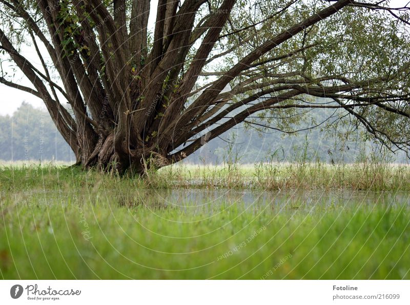 rainy season Environment Nature Landscape Plant Elements Earth Water Tree Grass Park Meadow Bright Cold Wet Natural Gray Green Deluge Inundated Gloomy Autumnal