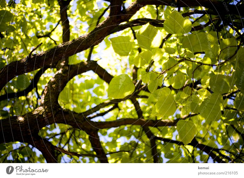 Nature Green Beautiful Tree Plant Summer Leaf Environment Bright Climate Growth Branch Illuminate Blossoming Beautiful weather Twig