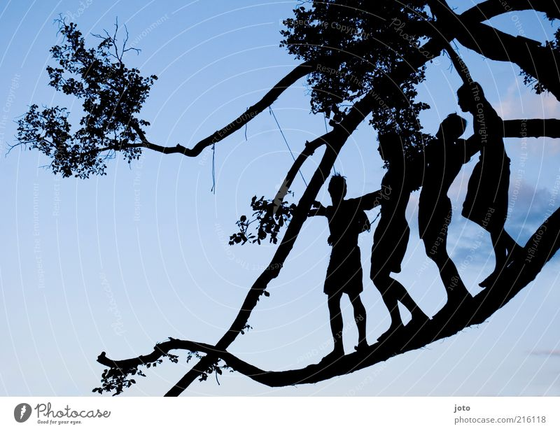 summer night Human being Nature Tree Twigs and branches Esthetic Together Happy Infinity Joy Enthusiasm Bravery Flexible Life Adventure Equal Attachment Group