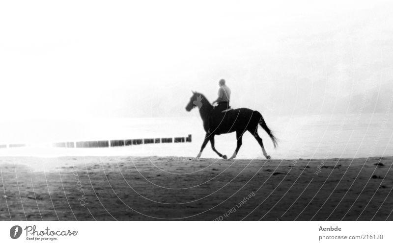 Water White Beach Animal Black Loneliness Landscape Sports Gray Sand Coast Moody Walking Esthetic Horse Longing