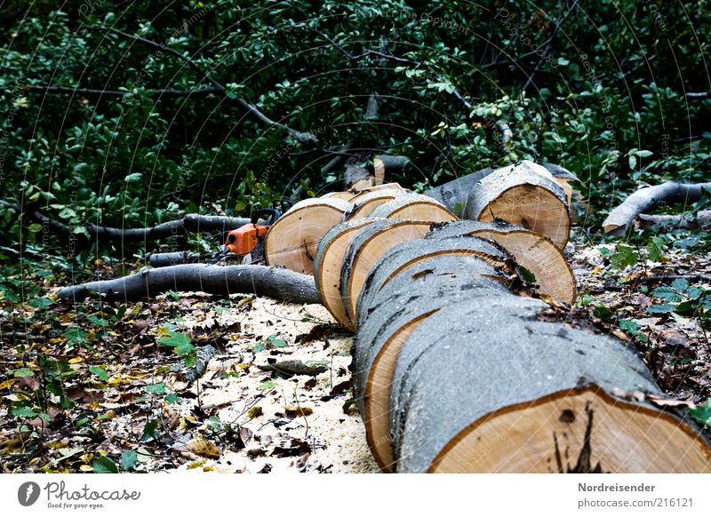 Wood in front of the hut Work and employment Environment Nature Tree Forest Authentic Beech tree beech wood hardwood Firewood Cut down Saw Forestry Colour photo