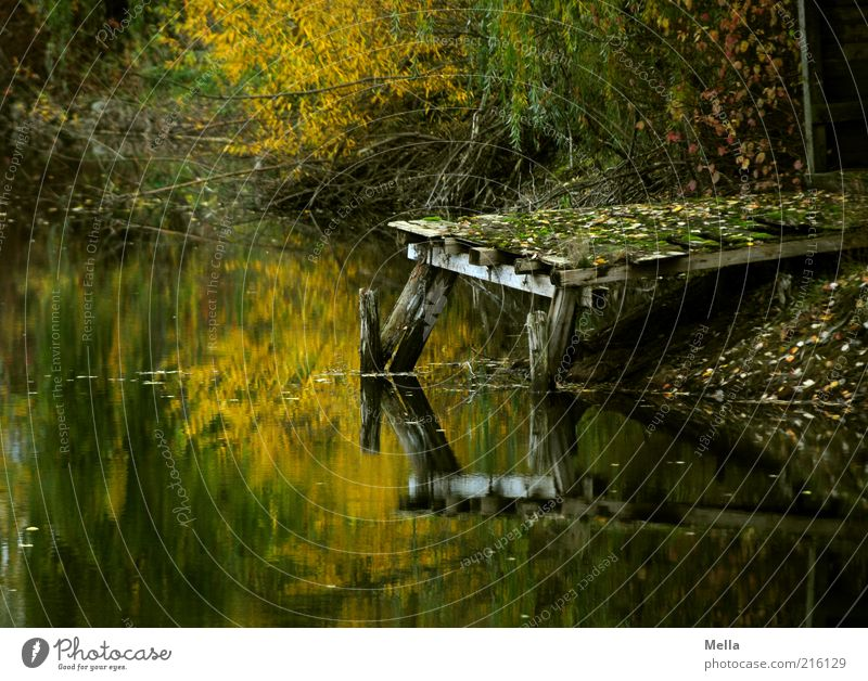 What remains of the day Environment Nature Landscape Water Autumn Lakeside Pond Footbridge Wood Old Dark Broken Natural Brown Moody Calm Loneliness End