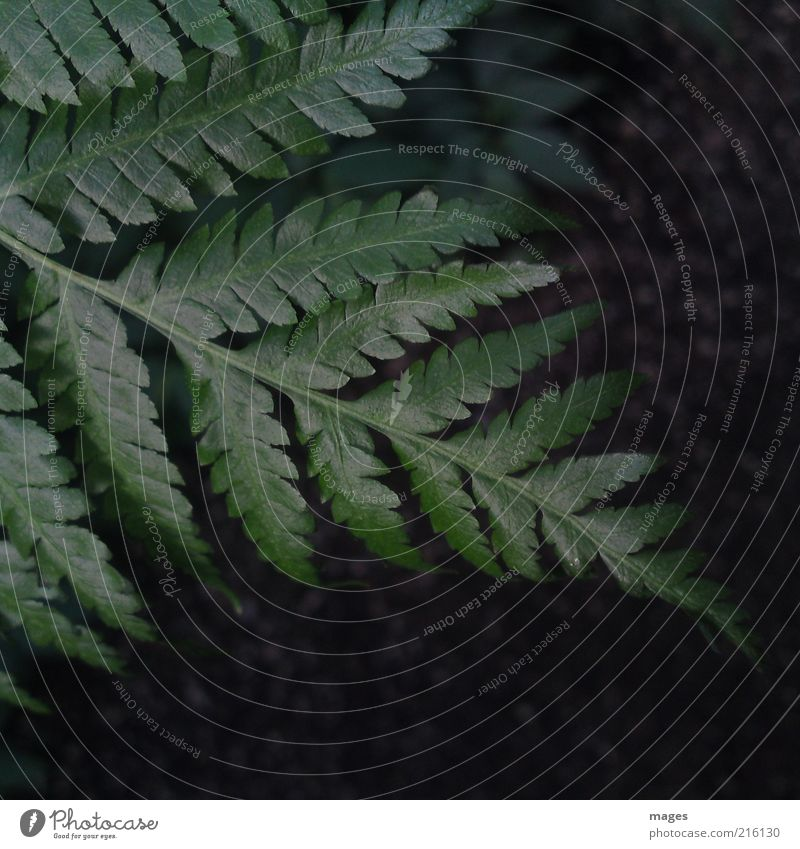 Nature Green Plant Calm Leaf Environment Growth Natural Partially visible Section of image Fern Foliage plant Peaceful Primordial Leaf green Fern leaf