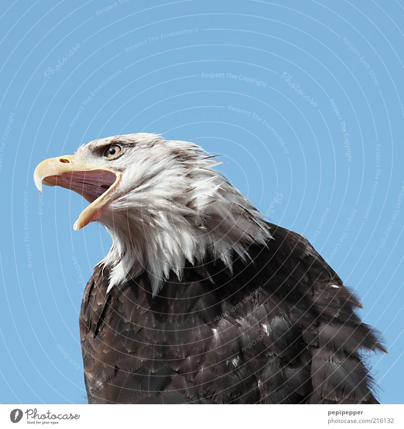freedom Freedom Environment Nature Air Sky Cloudless sky Animal Wild animal Bird Animal face 1 Strong Colour photo Exterior shot Close-up Detail Animal portrait