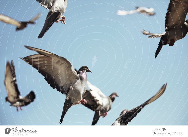 Away. Esthetic Bird Flock of birds Bird hunting Pigeon Flying Air Many Freedom Feather Sky Dove gray Wing Easy Coo Colour photo Subdued colour Exterior shot