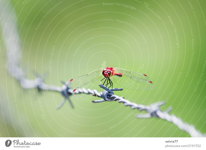 Nature Summer Green Red Animal Exceptional Esthetic Point Fence Insect Watchfulness Hunting Patient Thorny Dragonfly Overview