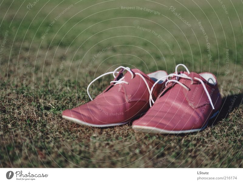 Style Fashion Exceptional Pink Footwear Uniqueness Lawn Hip & trendy Analog Trashy Leather Object photography High heels Shoelace Extravagant