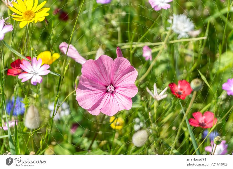 flower meadow Nature Summer Plant Blossom Foliage plant Meadow Happy flowers Colour photo Exterior shot Copy Space top Day Shallow depth of field