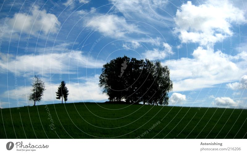 Sky Nature Blue Green Tree Plant Summer Leaf Clouds Black Environment Landscape Meadow Grass Horizon Field