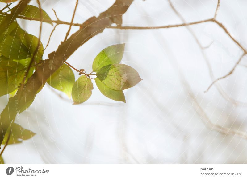 Nature Tree Leaf Bright Esthetic Growth Natural Change Transience Delicate Branch Twig Faded Autumn leaves Autumnal