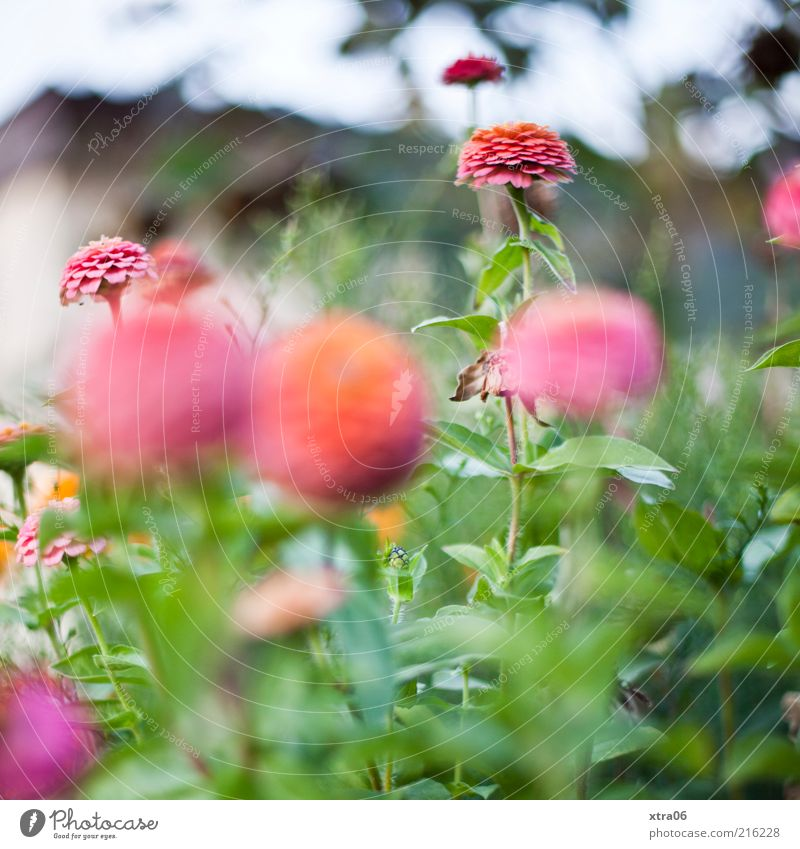 little flowers Environment Nature Plant Bushes Leaf Blossom Pink Colour photo Exterior shot Shallow depth of field Blossoming Garden Growth Spring Summer