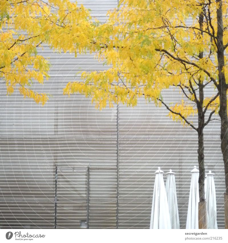 Nature White Tree Yellow Cold Autumn Architecture Gray Building Moody Metal Line Door Time Facade