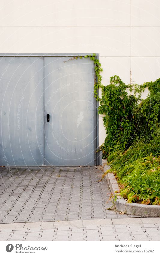 Nature White Green Plant House (Residential Structure) Street Wall (building) Gray Stone Wall (barrier) Building Metal Architecture Door Concrete Closed