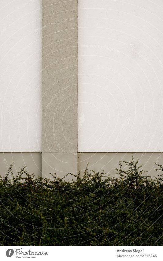 White Plant Colour Wall (building) Gray Wall (barrier) Building Line Architecture Background picture Concrete Facade Bushes Simple Stripe Manmade structures