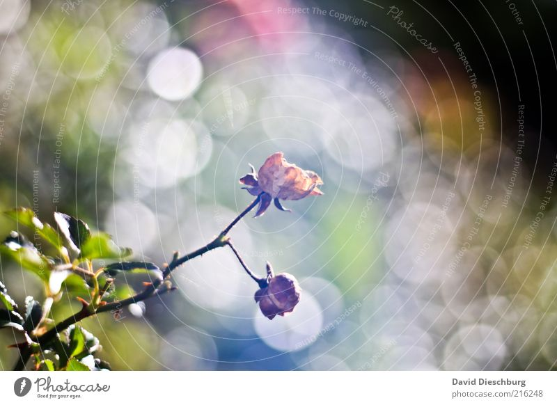 morning fog Nature Plant Autumn Rose Leaf Blossom Green White Faded Bright Growth Autumnal Visual spectacle Colour photo Detail Day Light Contrast