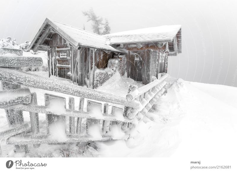 Gemma auf a Schnapserl in the snow-covered hut on the mountain Winter Hut Barn Alpine hut Wooden fence Exceptional Cold Frozen Snow Idyll Colour photo