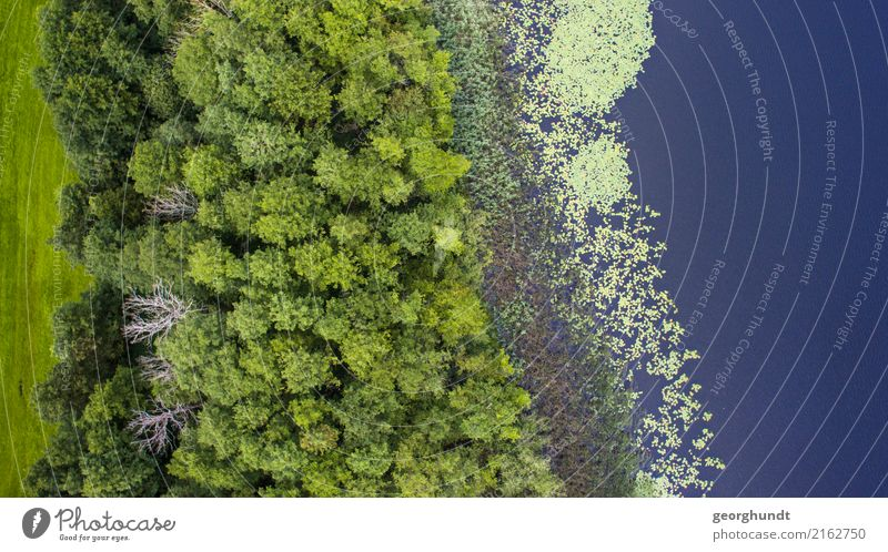 Water Forest II Agriculture Forestry Environment Nature Landscape Plant Earth Summer Tree Wild plant Coast Lakeside Pond Deserted Swimming & Bathing Blue Green