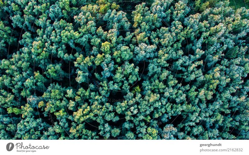 Krohnenblick Environment Nature Landscape Animal Summer Plant Tree Forest Virgin forest Adventure tree drone Treetop Colour photo Aerial photograph Deserted