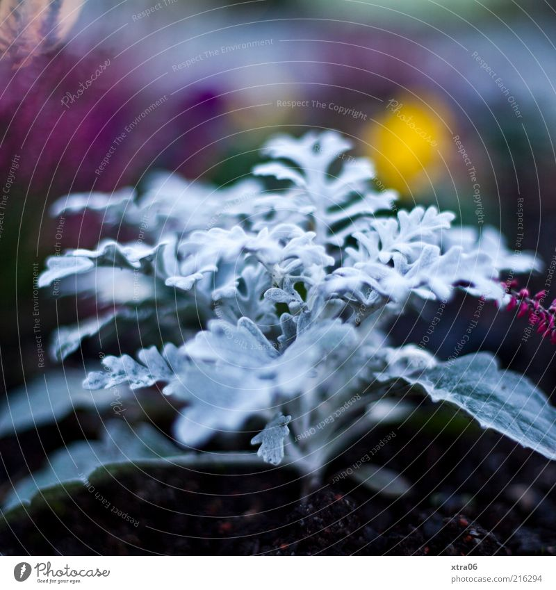 Nature Plant Cold Elegant Earth Growth Exotic