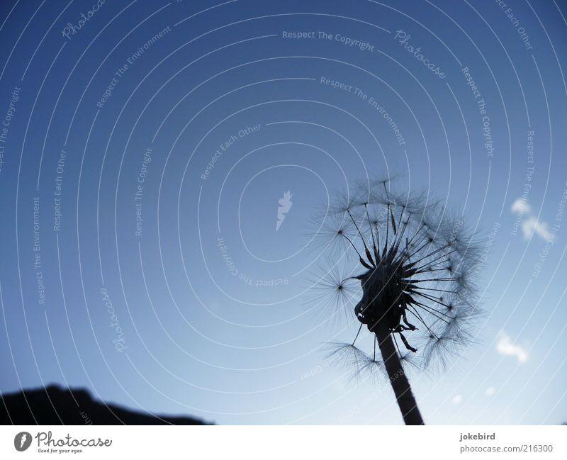 Sky Nature Blue Plant Clouds Far-off places Black Mountain Freedom Air Esthetic Infinity Asia Decline Dandelion