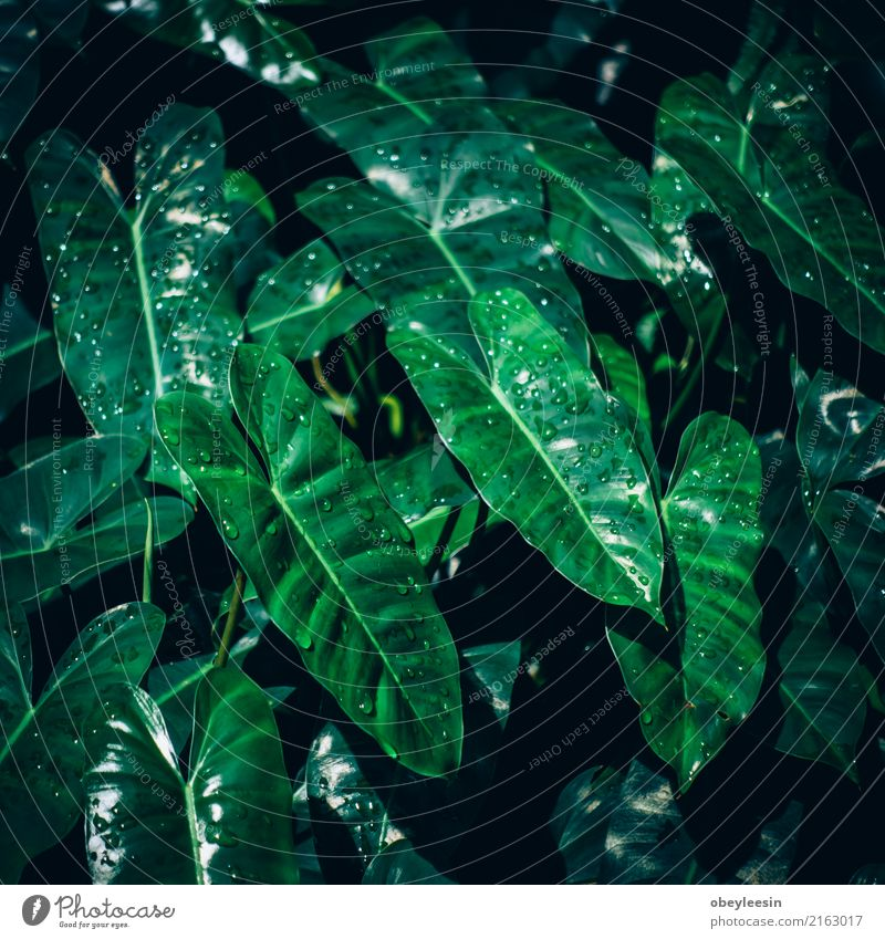 Creative layout made of green leaves. Flat lay. Nature concept Summer Garden Table Art Plant Tree Leaf Forest Aircraft Fashion Growth Fresh Bright Hip & trendy