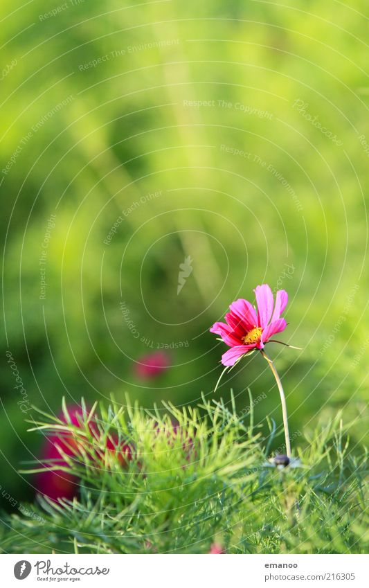 Nature Water Beautiful Flower Green Plant Summer Leaf Loneliness Meadow Blossom Grass Warmth Landscape Pink Environment