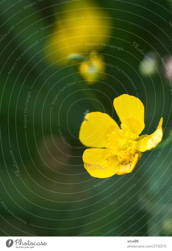 Early in the morning Environment Nature Plant Flower Blossom Yellow Colour photo Exterior shot Close-up Detail Copy Space bottom Blossom leave Blossoming