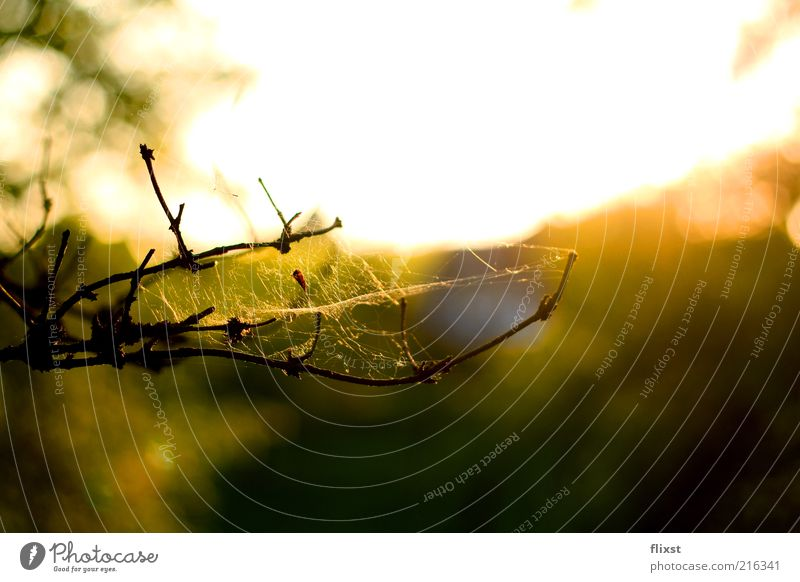 Nature Summer Branch Beautiful weather Twig Spider's web Environment Cobwebby