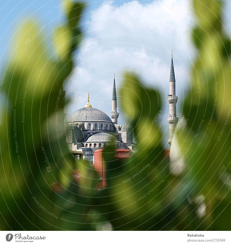 Blue mosque in the countryside Vacation & Travel Tourism Far-off places Sightseeing City trip Summer Istanbul Turkey Old town Manmade structures Building Facade