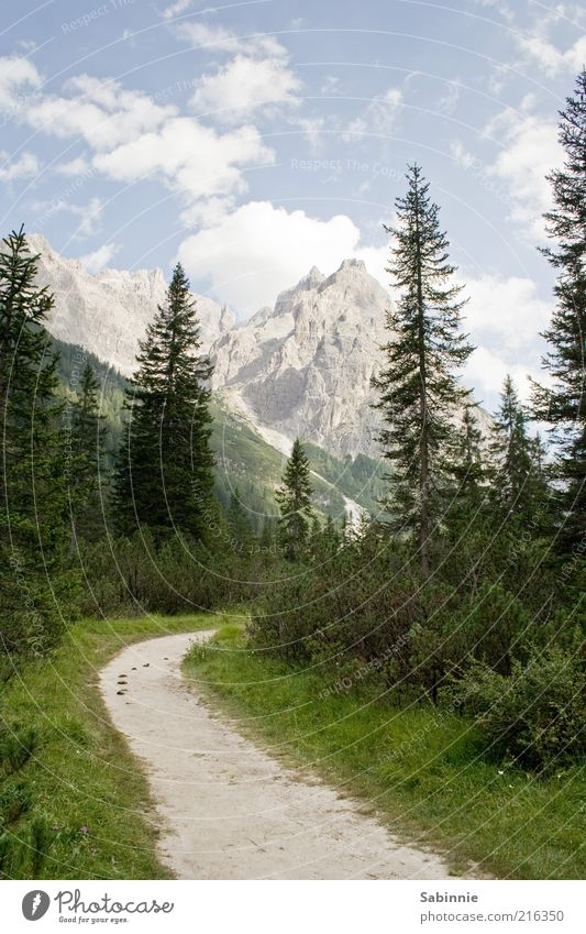Way to the Talschlusshütte Vacation & Travel Tourism Summer Mountain Environment Nature Landscape Sky Clouds Beautiful weather Tree Bushes Fir tree Spruce