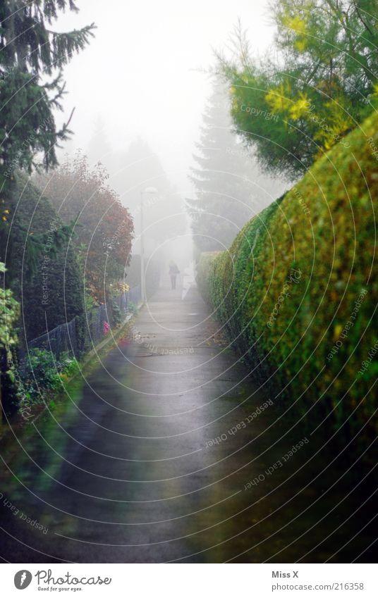 Tree Dark Cold Autumn Garden Lanes & trails Park Rain Fog Wet To go for a walk Climate Asphalt Creepy Fir tree