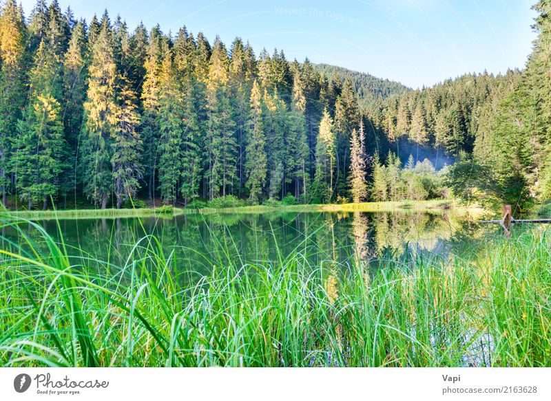 Forest lake in the mountains with blue water Sky Nature Vacation & Travel Plant Blue Summer Beautiful Green Water White Tree Landscape Relaxation Leaf Mountain