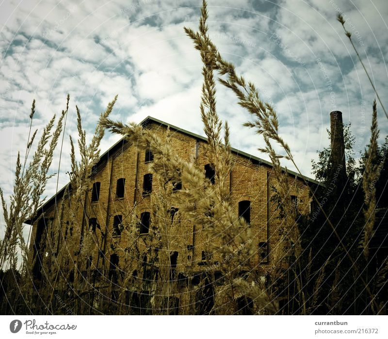 Blue Clouds Yellow Facade Factory Change Transience Derelict Brick Decline Past Blade of grass Chimney Wall (building) Stagnating Vacancy