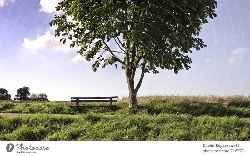 Wooden bench at the tree Summer Landscape Sky Beautiful weather Tree Leaf Meadow Field Arnsberg Deserted Bench Illuminate Growth Esthetic Blue Green Calm