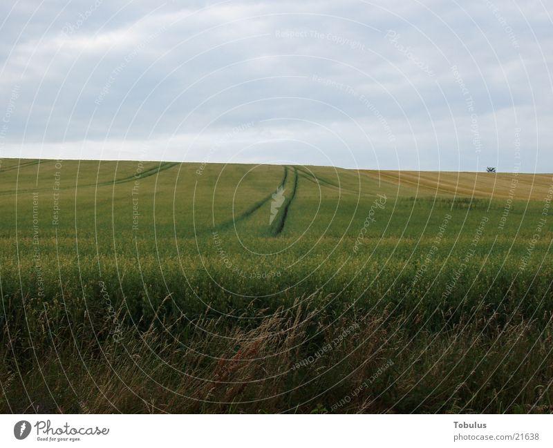 furrows in the field Field Tractor track Mountain Grain Sky