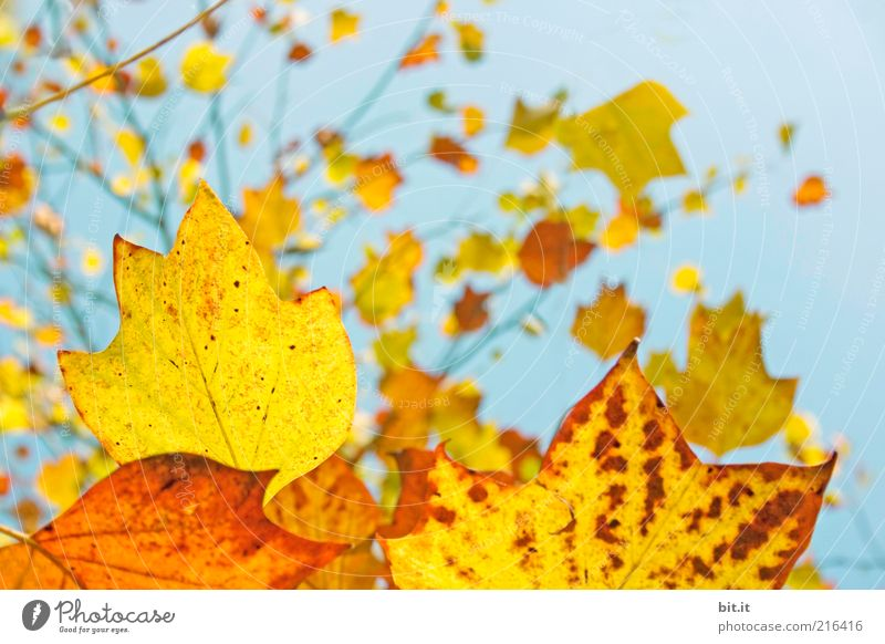 Sky Nature Blue Tree Red Plant Leaf Yellow Autumn Air Time Weather Gold Climate Change Beautiful weather