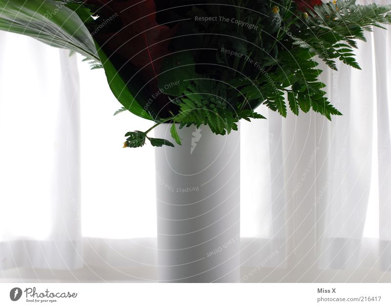 vase Decoration Plant Flower Leaf Blossom Pot plant Blossoming White Bouquet Vase Flower vase Drape Window Curtain Colour photo Interior shot Detail