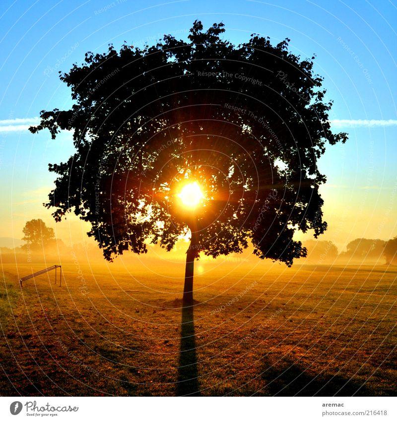 Nature Sky Tree Sun Blue Plant Calm Far-off places Yellow Meadow Autumn Landscape Fog Sunrise Beautiful weather Treetop