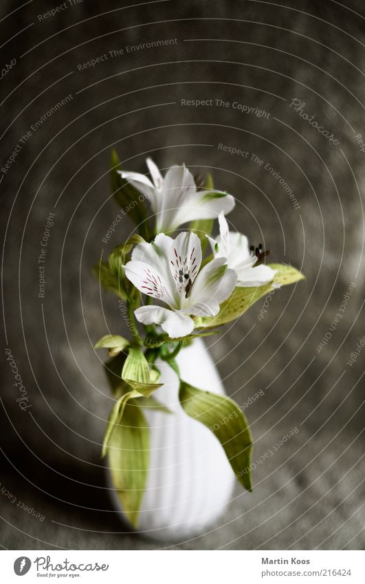 Beautiful White Green Plant Leaf Emotions Style Blossom Small Design Esthetic Decoration Fragrance Bouquet Positive Spring fever